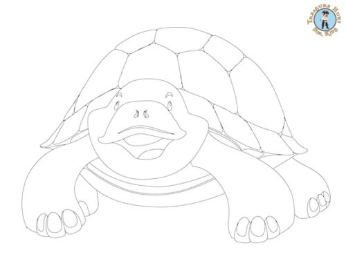 turtle printable coloring page