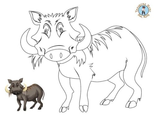 Warthog coloring page